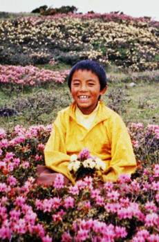 young_mingyur_rinpoche
